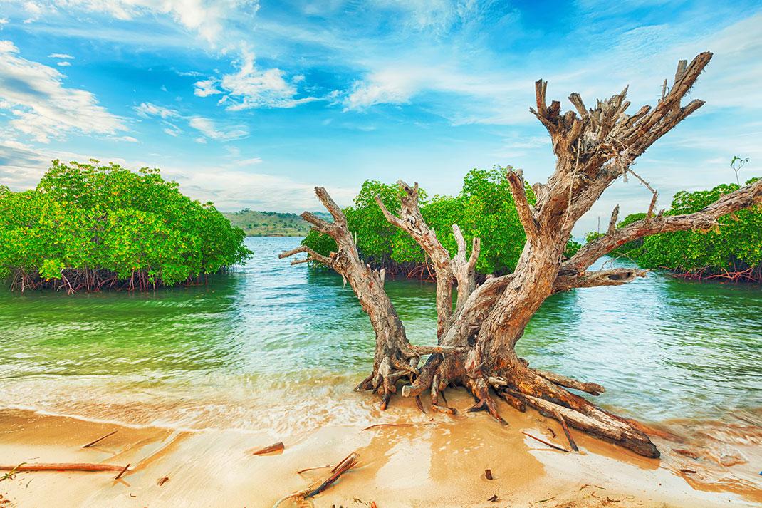 Un arbre sur une plage indonésienne via Shutterstock