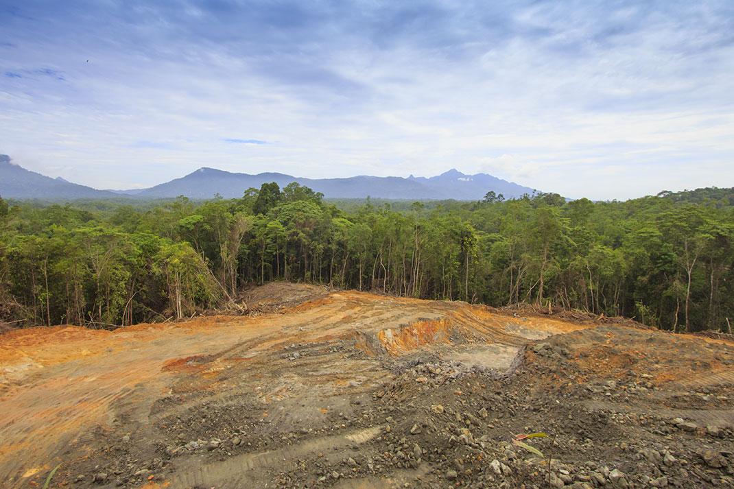 La déforestation de la forêt tropicale malaisienne via Shutterstock