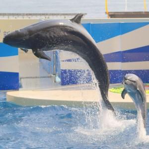Fausse-orque-2
