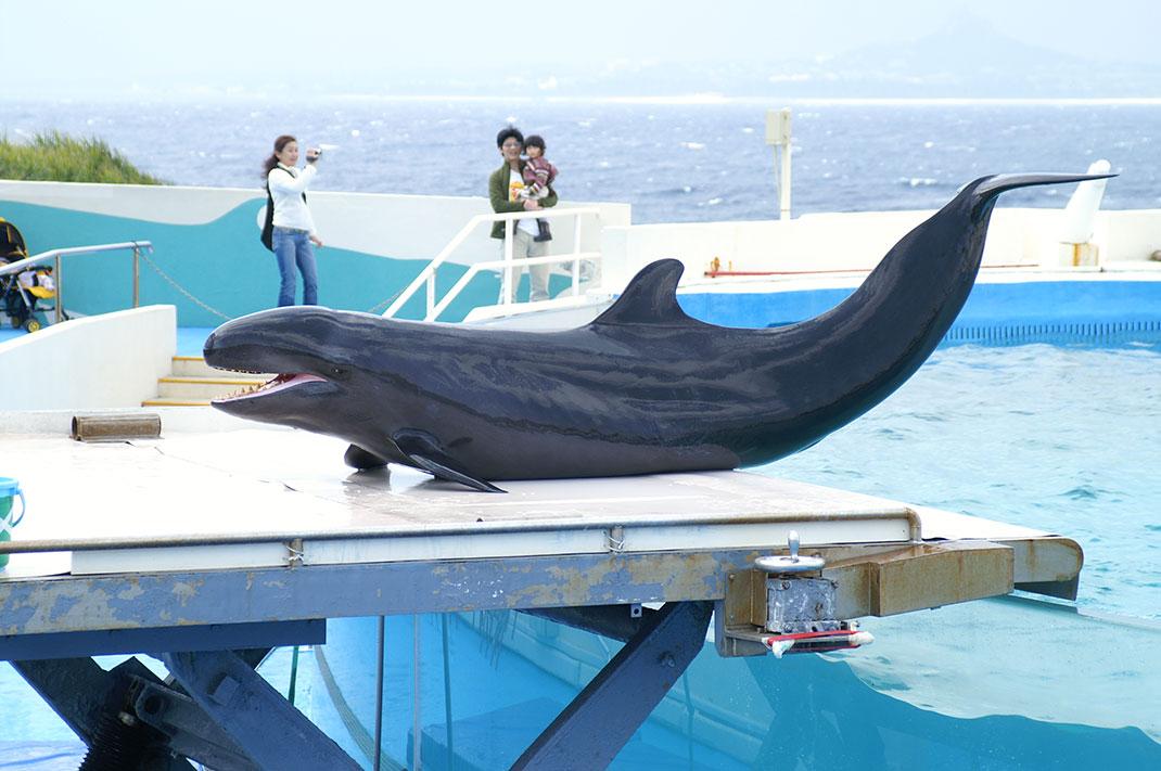 Fausse-orque-3