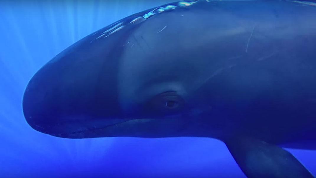 Fausse-orque-4