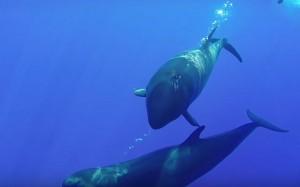 Fausse-orque-5