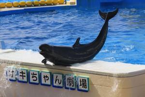 Une fausse orque via Shutterstock