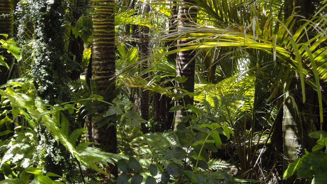 Foret-tropicale-1