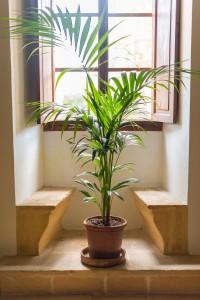 Un palmier en intérieur via Shutterstock