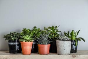 Des plantes d'intérieur via Shutterstock