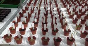Plantes-Mars-3