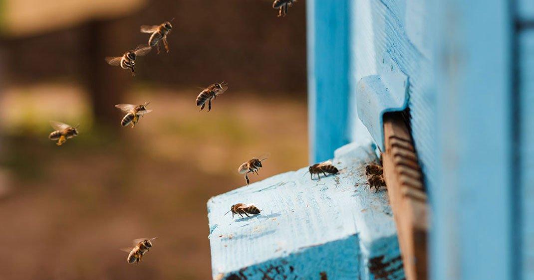 ces fran ais ont mis au point une ruche futuriste permettant la survie des abeilles en milieu. Black Bedroom Furniture Sets. Home Design Ideas