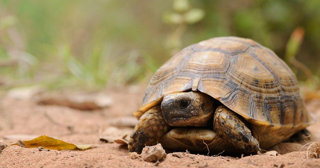 UNE-tortue2