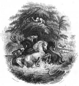 Une reproduction de l'anecdote d'Alexander von Humboldt