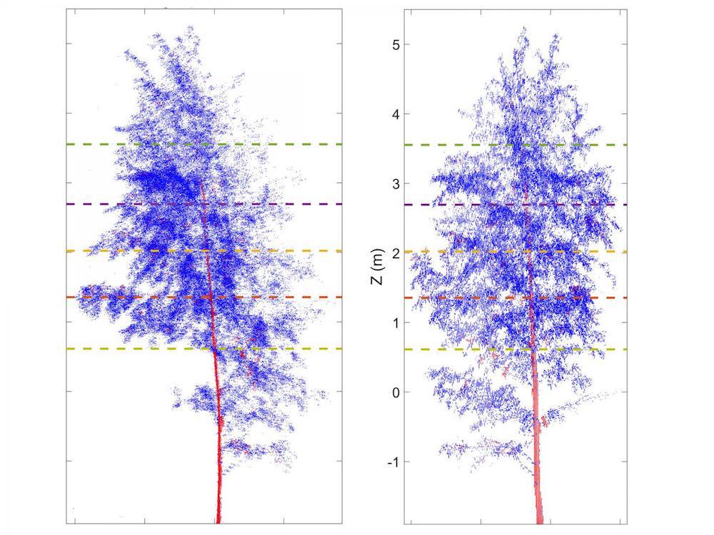 Les scanners infrarouges des mouvements des arbres durant la nuit