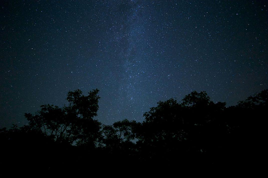 arbres-nuit