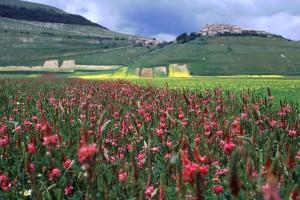 castelluccio-italie-champs-5
