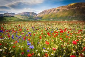Des champs de fleurs s'étalent devant des montagnes en Italie via Shutterstock
