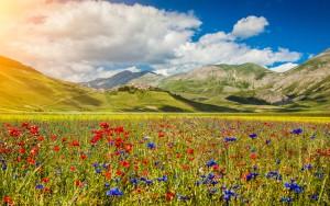 Les magnifiques champs de fleurs de Castelluccio en Italie via Shutterstock