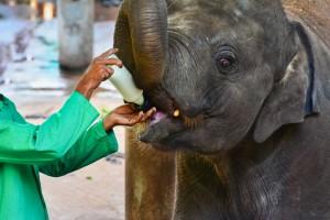 centre-rehabilitation-elephant