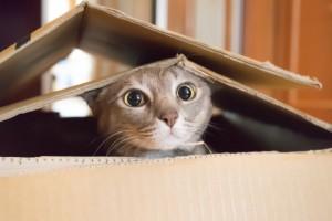 Un chat qui joue dans une boite en carton via Shutterstock