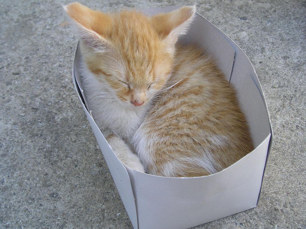chats-cartons-boites-2