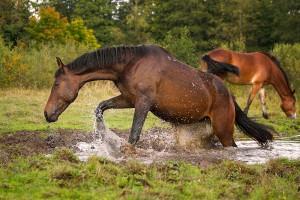 Un cheval via Shutterstock