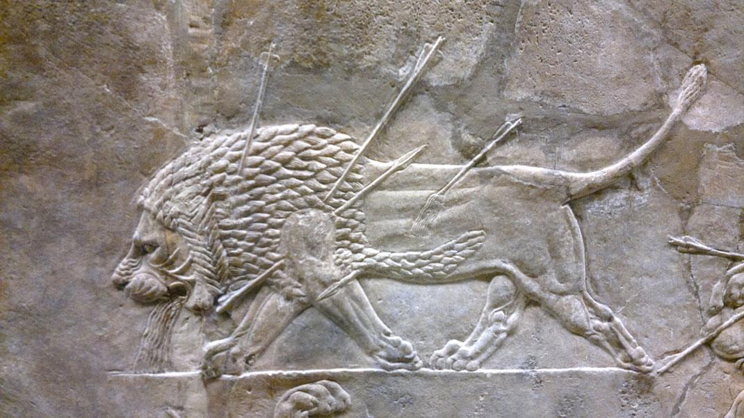 Bas-relief représentant un lion lors de la chasse aux lions en Assyrie, VIIème siècle avant J.-C.