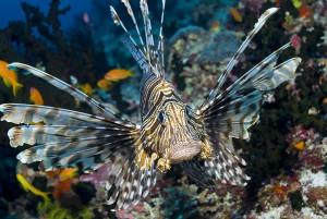 Un Pterois via Shutterstock