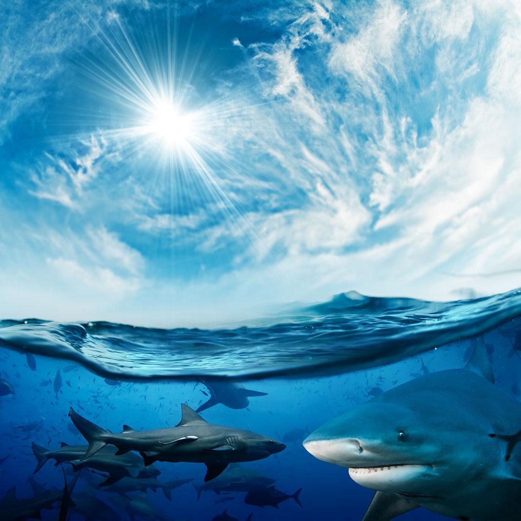 requins-mer
