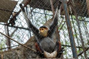 Un singe en cage via Shutterstock