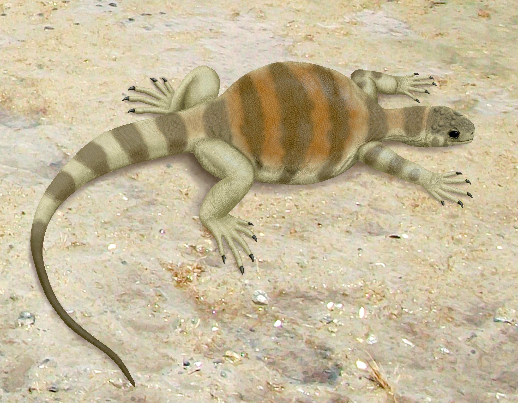 Représentation de l' Eunotosaurus africanus selon les données connues (by Smokeybjb)