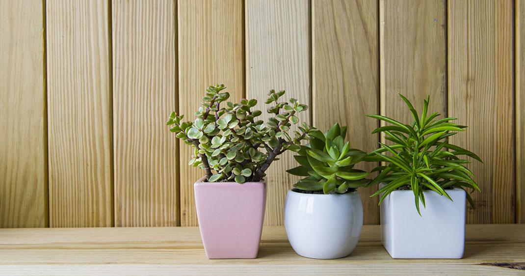 15 plantes qui vous permettront de purifier naturellement votre int rieur daily geek show. Black Bedroom Furniture Sets. Home Design Ideas