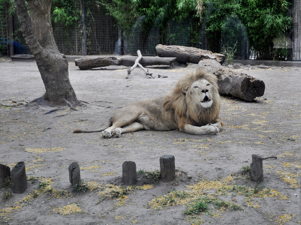 zoo-argentine-buenos-aires-1