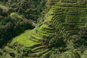 Banaue-riz-plantation