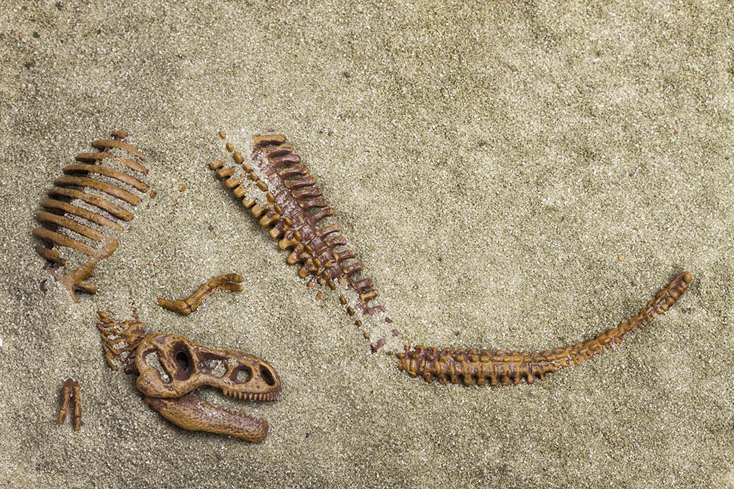 Fossiles-shutterstock