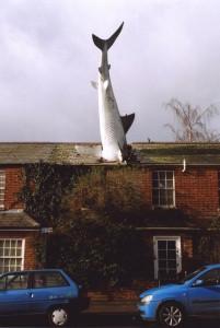 Headington-requin-1