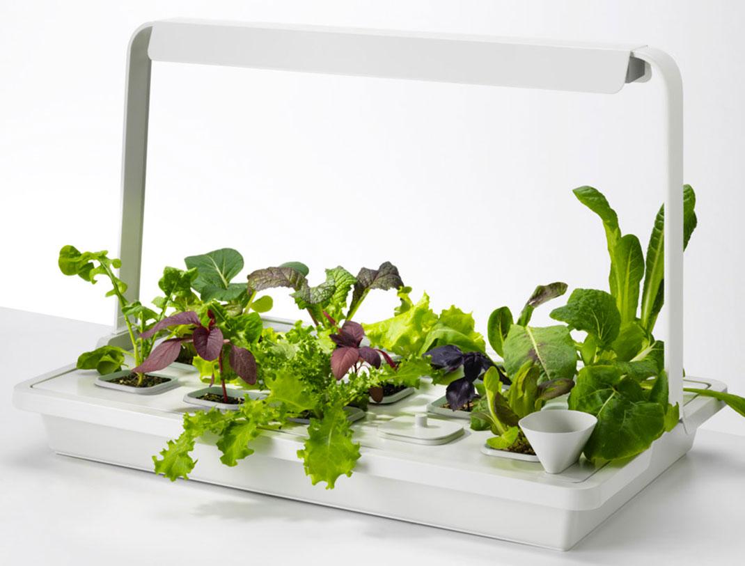 plante verte ikea excellent plante verte ikea fashion designs with plante verte ikea cool. Black Bedroom Furniture Sets. Home Design Ideas