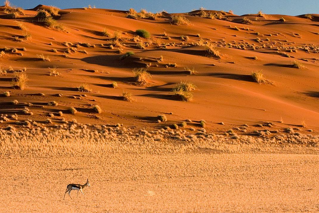 Sossusvlei-Namibie-2