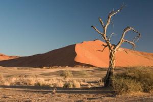 Sossusvlei-Namibie-5