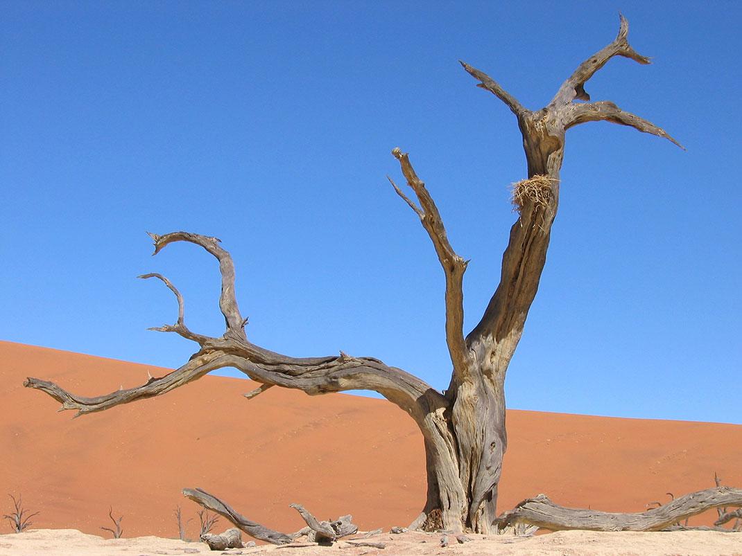 Sossusvlei-Namibie-7