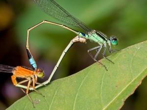 Des libéllules via Shutterstock
