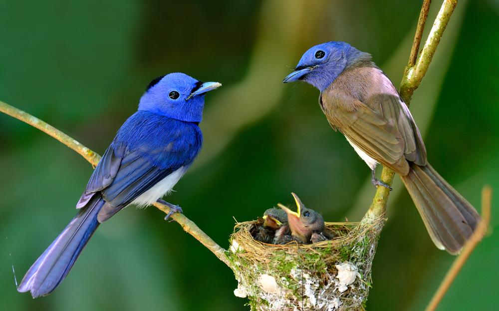 famille-oiseau