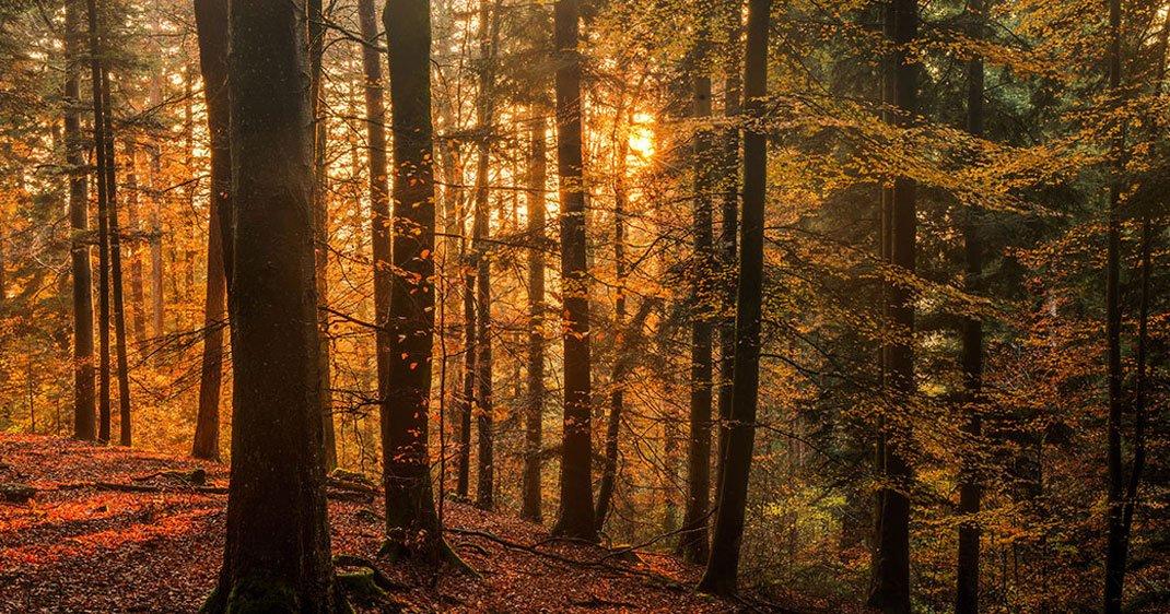 Fabuleux Pénétrez dans l'une des plus belles forêts du monde : la Forêt  NQ12