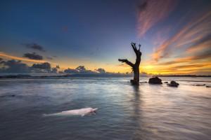 paysage-dauphin-rose