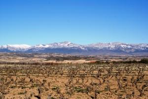 Les vignobles de La Rioja