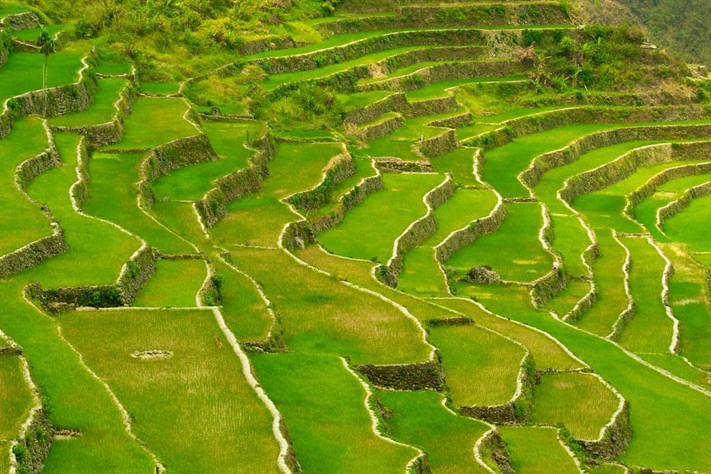 riziere-banaue-philippines