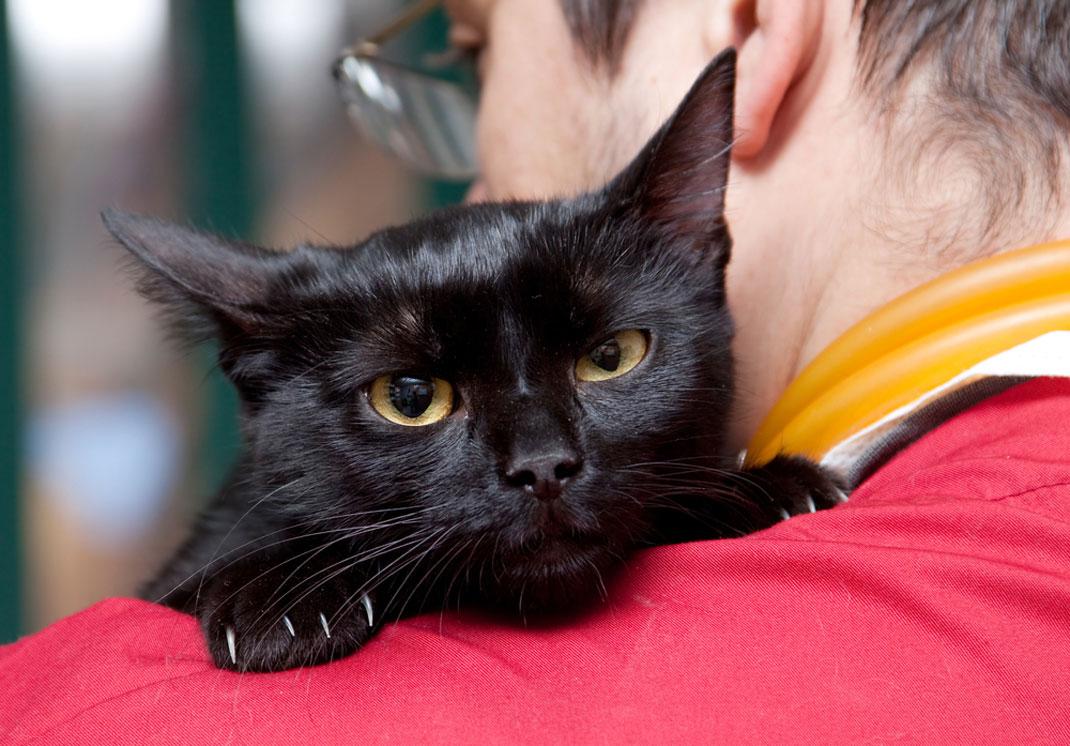 Un chat malade dans les bras de son maître via Shutterstock