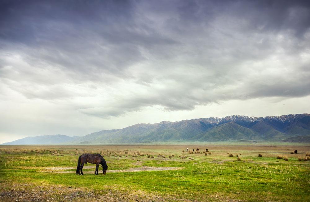 Un cheval dans les steppes mongoles via Shutterstock