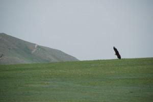 steppes-mongoles-mongolie-nature-4