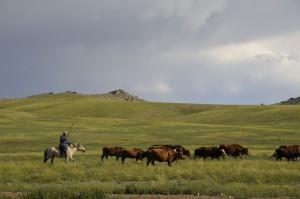 steppes-mongoles-mongolie-nature-6