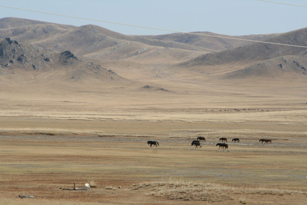 steppes-mongoles-mongolie-nature-7