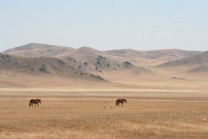 steppes-mongoles-mongolie-nature-8