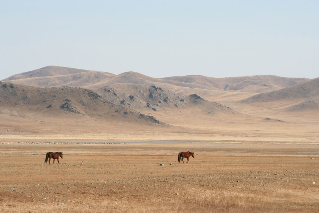 steppes-mongoles-mongolie-nature-8